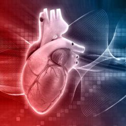 دانلود ترجمه مقاله مدل ریاضی قلب انسان شامل تاثیرات انقباضپذیری قلب منطبق با تغییر ضربان قلب – الزویر ۲۰۱۸