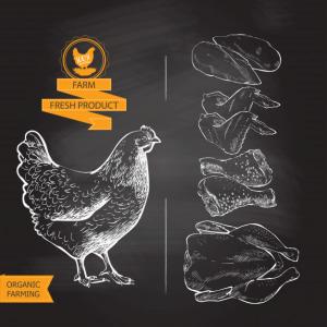 دانلود ترجمه مقاله بهبود عملکرد رشد، مورفولوژی روده و شاخص بیوشیمی سرم جوجه گوشتی – Oxford Journals 2018