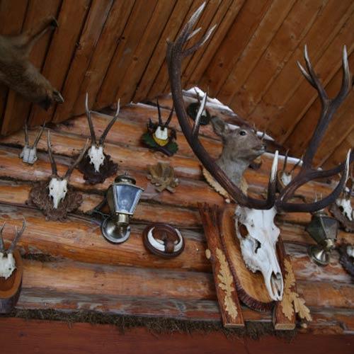 دانلود ترجمه مقاله چگونگی تاثیر تراکم و توزیع شکار بر الگوی استفاده از زیستگاه توسط شکارچی – اسپرینگر ۲۰۱۸