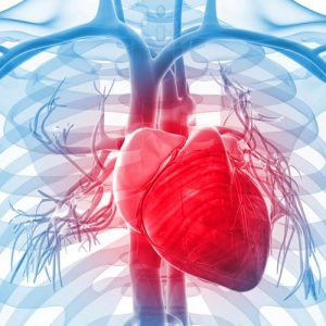 دانلود ترجمه مقاله تشخیص و درمان بیماران جوان در معرض خطر بیماریهای قلبی – عروقی – الزویر ۲۰۱۸