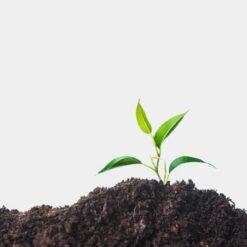 دانلود ترجمه مقاله حاصلخیزی خاک بعد از ده سال خاک ورزی حفاظتی در کشت آلی – الزویر ۲۰۱۸