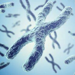 دانلود ترجمه مقاله TUG1 افزایش پیشرفت سرطان پروستات با فعالیت به عنوان یک ceRNA از miR-26a – نشریه Bioscirep 2018